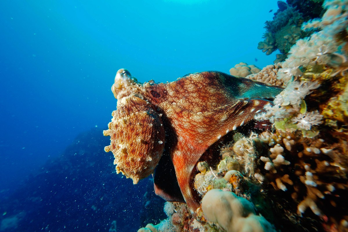 Hotel Terme San Valentino - Diving and snorkeling
